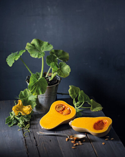 An Ode to Butternut