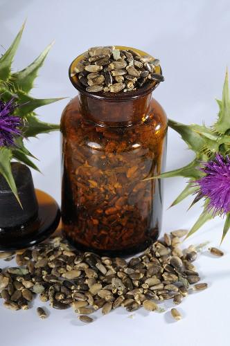 Milk thistle seeds (silybum marianum, carduus marianus)