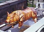 A Whole Pig Roasting