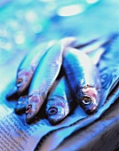 Sardines on a Newspaper
