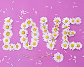 The word 'LOVE' written in daisies on pink background