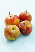 Four 'peach' plums (Old English cultivar)