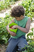 A little boy holding a bucket of strawberries in a strawberry field