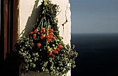 Bouquet of Peppers and Herbs Drying