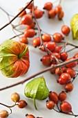 Lampionblumen und Hagebutten