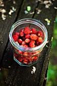 Freshly picked wild strawberries in a screw-top jar
