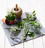 Kichen herbs on a slate sheet