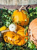 Various pumpkins in a garden
