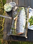 Salmon with wasabi cucumber