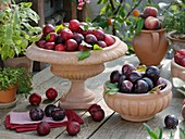 Red and purple plums in terracotta bowls