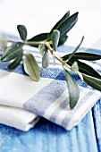 Olive branch on blue and white cloth