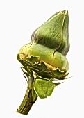 A washed artichoke