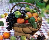 Basket of plums and grapes