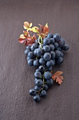 Black grapes and autumn leaves