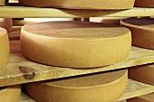 Bergkäse cheese (Alpine cheese) on wooden shelves