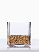 Spelt grains in a square glass