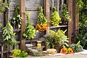 Sage, agastache, lemon balm, marigolds, lady's mantle, oregano, borage, fennel
