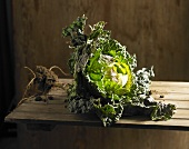 A cabbage with roots