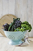 Leaves of various types of kale in a colander