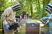 A beekeeper working with hives