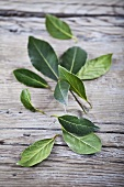 Fresh bay leaves on a wood background
