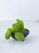 Fresh basil in a bowl