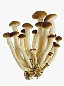 Velvet mushrooms