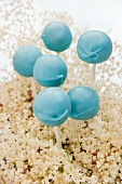 Light blue cake pop stuck into elderflowers