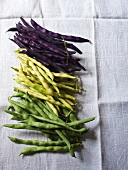 Green, yellow and purple bush beans