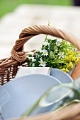 Crockery and a bunch of flowers in a picnic basket (close-up)