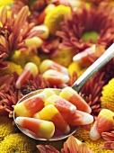 Candy Corn auf Löffel in herbstlicher Blumendeko