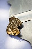 Slice of black truffle on truffle slicer