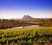 Wine-growing region around Paarl against Simonsberg, S. Africa