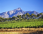 Wine-growing region in Tulbagh, S. Africa