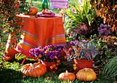 Tisch im Freien, davor Herbstblumen und Kürbisse