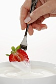 Half a strawberry being hand dipped in organic yogurt