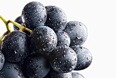 A bunch of black grapes with drops of water