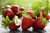 Fresh strawberries with flower and leaves