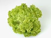 A Lollo Biondo lettuce