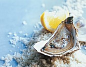 A fresh oyster with a lemon wedge on sea salt