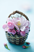 Cherry blossoms in a small basket