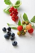 Raspberries, blueberries and redcurrants