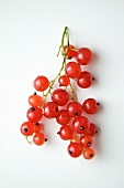 Red Currant Branch on a White Background