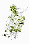 Romanesco broccoli with a water splash
