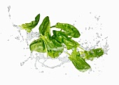 Fresh spinach with a water splash