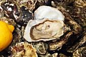 Fresh Irish oysters with lemon (close-up)