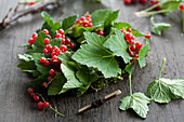 A wreath of redcurrants being made