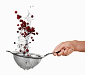 Washing cranberries in a sieve