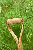 A spade handle in a garden
