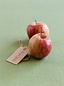 Two Royal Gala apples with a label